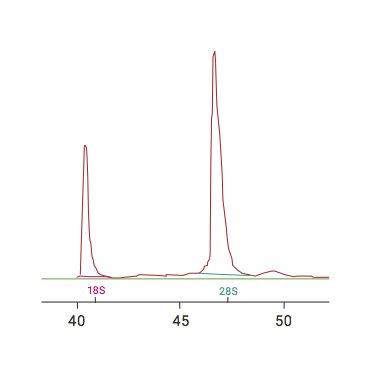 high-rin-values_2